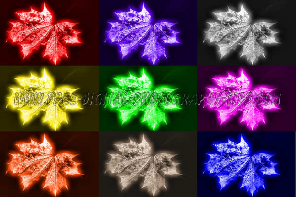 Multi colored leaves grouped together colorful digital art image