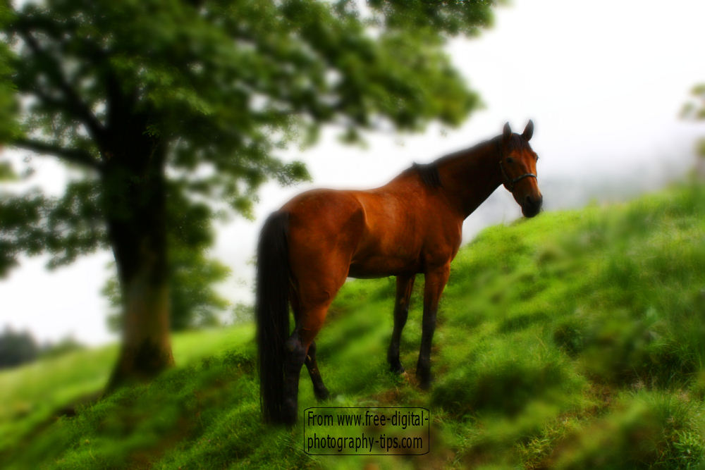 wildlife photography Awesome looking beautiful brown horse grazing steep Mount Rigi hillside Switzerland