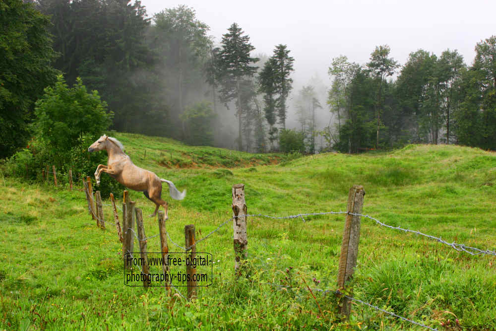 wildlife photography beautiful swiss palomino horse jumping fence switzerland swiss alps