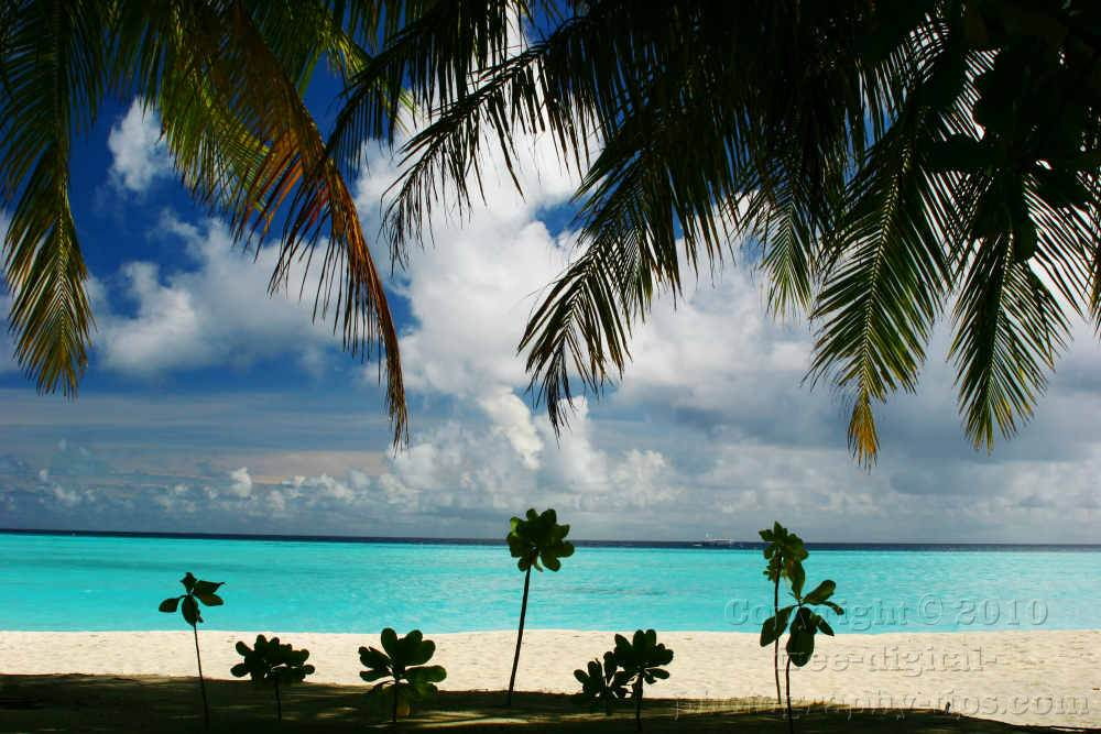 honeymoon maldives beach sand sun island turquoise ocean water palm tree