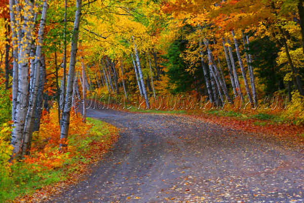 Great fall colors foliage on a small dirt road near Lac La Belle Michigan in the Upper Peninsula of Michigan.