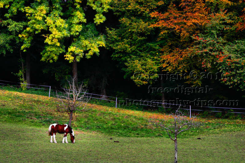 Horse photography colorful brown white spotted swiss horse grazing fall foliage Lucerne Switzerland