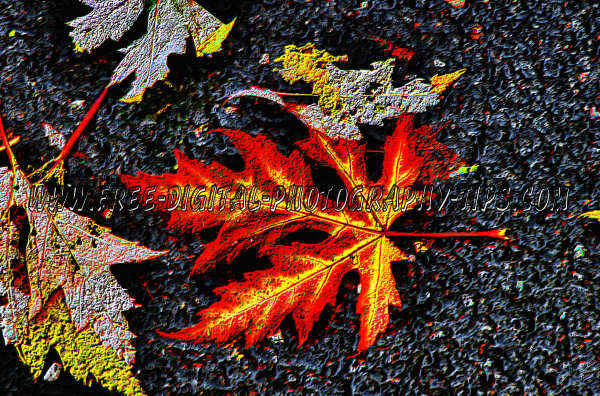 Colorful red yellow leaf lying pavement Luzern Switzerland Autumn color season