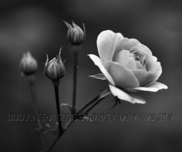 Black And White Photography Tips And Photos On Wwwfree Digital