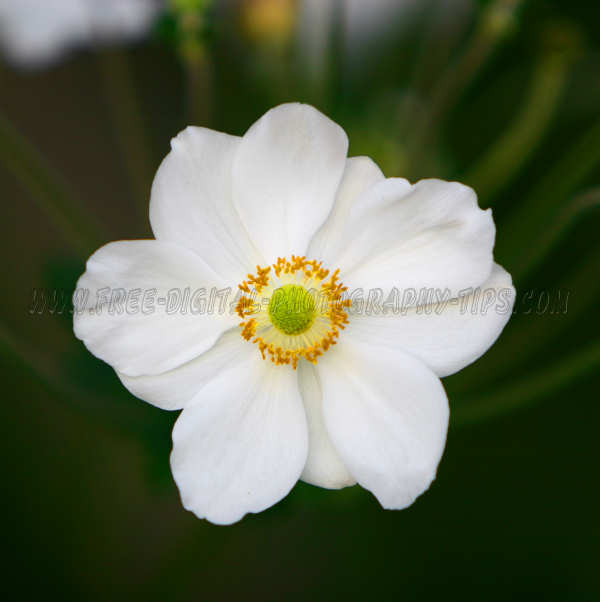 Bright white flower soaking sun Luzern Switzerand