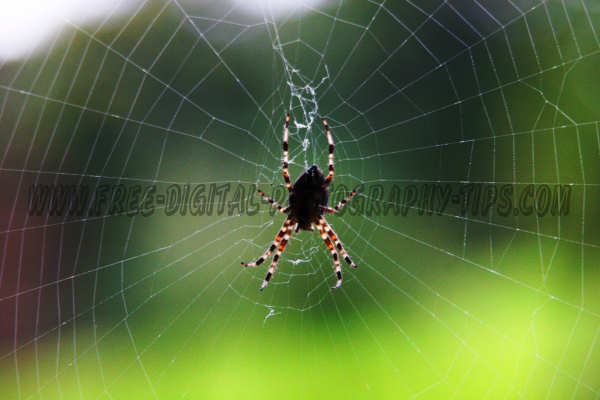 wildlife photography Huge cool looking spider creating its web in Luzern Switzerland.